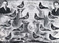 Pet Pigeon, Dove Pigeon, Racing Pigeon Lofts, Pigeon Breeds, Zebra Finch, Racing Pigeons, Helmut Newton, Animals And Pets, Van