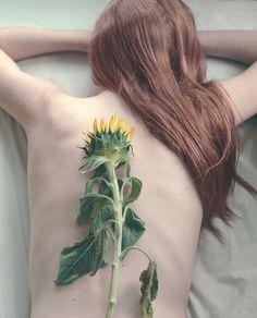sunflowersss