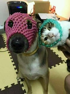 61 new ideas for dogs funny costumes smile Cute Funny Animals, Funny Animal Pictures, Funny Cute, Funny Dogs, Cute Cats, Crazy Cat Lady, Crazy Cats, Animals And Pets, Baby Animals