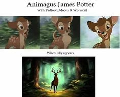 James Potter as an Animagus with the Marauders vs. With Lily Evans Harry Potter Humor, Harry Potter Facts, Harry Potter Universal, Harry Potter World, James Potter, Hogwarts, Jily, Drarry, Yer A Wizard Harry