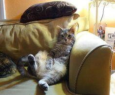cute tripod adopted 3-legged cat Pythagoras