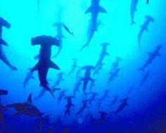 Diving in Borneo #JetsetterCurator