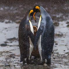Genre: Animals. 50 best photographers #35PHOTO 2016