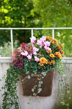 Syyskuu puutarhassa