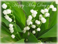 Happy May Day may may quotes happy may day may day may day quotes happy may quotes