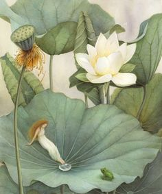 lotus and fairy