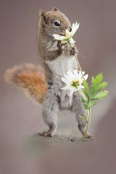 """magicalnaturetour: """"(via 500px / Squirrel and flower by Andre Villeneuve) """""""