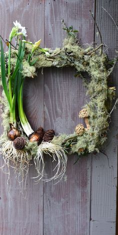 "'not so square""- wreath with blooming narcissus bulbs"