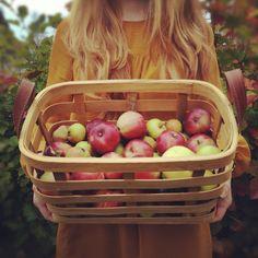 Basket of freshly picked apples.