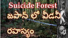 suicide forest in japan mystery-జపాన్ లో వీడనీ రహస్యం తెలుగులో
