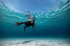#photography #horse #underwater #sea #swim