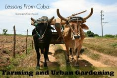 Lessons from Cuba: Farming and Urban Gardening