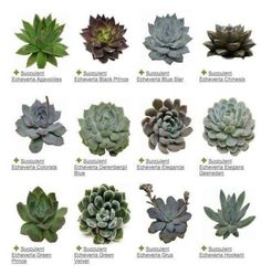 Identification of Succulents