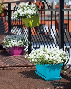fiori-da-balcone-vasi-colorati
