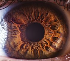close-up of the human eye