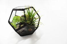 Kit terrarium - petit verre géométrique dodécaèdre - usine d'air ionantha