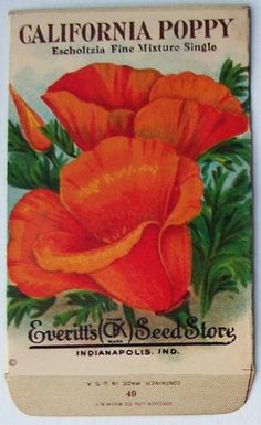 EVERITT'S SEED STORE,  California Poppy 49, Vintage Seed Packe