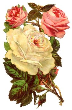 RosesWhitePink-GraphicsFairy1.jpg 1,032×1,584 pixels