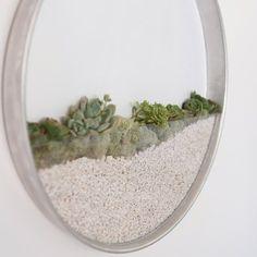 Sem espaço? Plantas emolduradas criam microjardim na parede