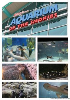 Enjoy a fun family outing in the Smokies at the Ripley's Aquarium in Gatlinburg. So much to discover and learn. #Ripleys #Gatlinburg