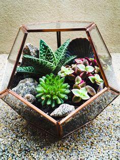 Indoor Terrarium - Cacti, Succulents and Seashells in Hexagonal Glass Bowl with…