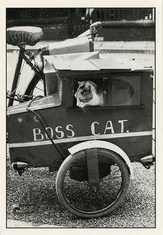 Vintage Boss Cat!