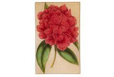 Rouge Rhododendron on OneKingsLane.com