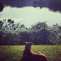 Chorven enjoys the view at Holland Park.