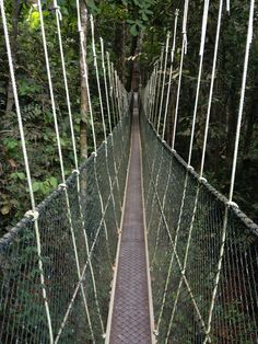 Canopy walk in Penang National Park, Malaysia. Backpacking through South East Asia.