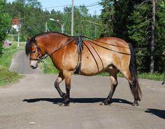 Gotland Pony - mare Azalea RR 5010 (Hadar - Ada - Jucent) | Gotlandsruss iFokus