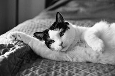 Such a sensual feline pose!! Giving that come here and give us a kiss look!!