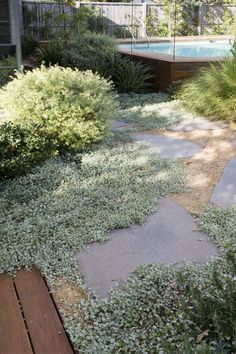 Silver dichondra, Westringia 'morning light', grasses… dg & Flags - front yard ideas no grass Garden Cottage, Diy Garden, Garden Pool, Farmhouse Garden, Decoration Shabby, Australian Native Garden, Coastal Gardens, Small Gardens, Sloped Garden