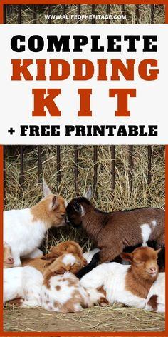 Kidding kit list to prepare you completely for when kidding goats begins! Be prepared so you can prevent problems and keep your goats healthy from the very beginning. Breeding Goats, Happy Goat, Nubian Goat, Goat Care, Nigerian Dwarf Goats, Raising Goats, Cat Care Tips, Goat Farming, Baby Goats