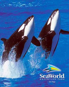 Had the privilege of visiting SeaWorld in San Diego many times as a child, gratzi Gramma and Grampa Beck