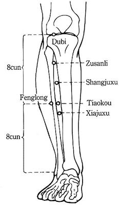 Zu San Li le point de longévité