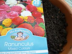 Plant Bulbs in Autumn - Ranunculus