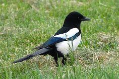 Obrázky a zvuky ptáků je možné i stáhnout Bird Feathers, Birds, Education, Nature, Animals, Naturaleza, Animales, Animaux, Bird