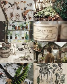 "world of harry potter: Herbology"" Three times a week they went out to the greenhouses behind the castle to study Herbology, with a dumpy little witch called Professor Sprout, where they learned how to take care of strange plants and fungi, and found. Harry Potter Plants, Theme Harry Potter, Harry Potter Quotes, Harry Potter Witch, Autumn Aesthetic, Witch Aesthetic, Aesthetic Collage, Gay Aesthetic, Aesthetic Rooms"