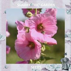 PINK HOLLYHOCK ~ Sacred Edible Plant ~ Victorian Shabby Chic Garden ~15 Flower Seeds ~ Garden Gift  ~ Easy To Grow by VikkiVines on Etsy