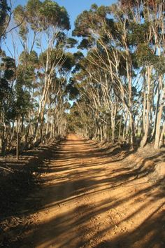 Overberg scenery. BelAfrique - Your Personal Travel Planner - www.belafrique.com Beautiful Roads, The Beautiful Country, Wonderful Places, Beautiful Places, Africa Destinations, Living In Europe, Interesting Photos, African Safari, Travel Planner