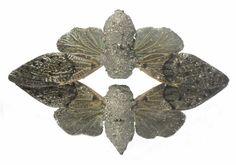 Fossils - Märta Mattsson Jewellery & Objects