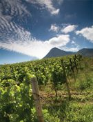 Creation strives to reward the wine lover with wines of rare balance, elegance, distinction & finesse, from South Africa's Walker Bay Wine Region, Hermanus. Sauvignon Blanc, Cabernet Sauvignon, Art Thou, Pinot Noir, Wine Recipes, Wines, Vineyard, Red, Travel