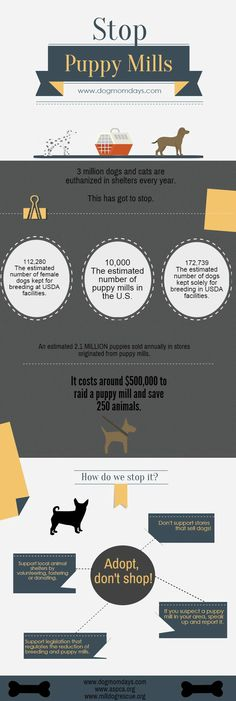 Stop puppy mills! Adopt, don't shop! Puppy mill facts and statistics. Animal Rescue | Dog Rescue | Dog Adoption | Rescue Mom | Puppy Mills | Animal Rights |