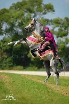 Arabian Horse Arabian Horse Show - Western Competition Egyptian Stallion Breeding PIntabians~
