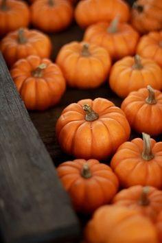 Pretty little pumpkins