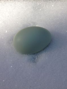 Our first blue egg!