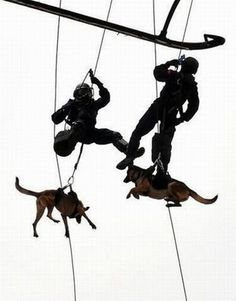 MILITARY DOGS ROCK!!!