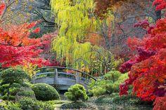 Japanischer Ahorn: Das sollten Sie als Gärtner über den Exoten wissen | eBay