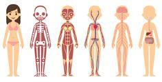 Bastante complexo, o corpo humano trabalha como uma verdadeira máquina poderosa cheia de engrenagens...