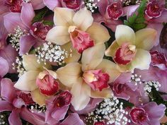 Charming orchids
